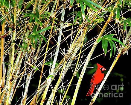 Red cardinal in Hawaiian Bamboo forest  by Lehua Pekelo-Stearns