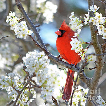 Red Cardinal In White by Nava Thompson