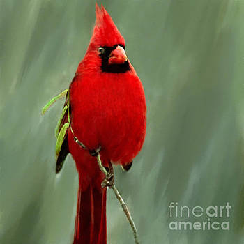 Red Cardinal Painting by Bob and Nadine Johnston
