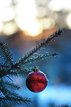 Red Christmas bauble covered with frost by Ulrich Kunst And Bettina Scheidulin