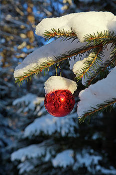 Red Christmas bauble covered with snow by Ulrich Kunst And Bettina Scheidulin