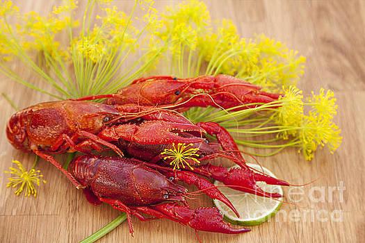 Sophie McAulay - Red crayfish