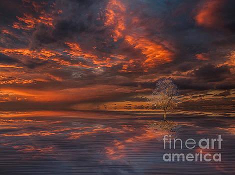 Red Darkness by Barbara Dudzinska