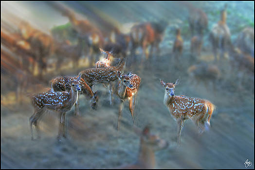 Red Deer Dreams at Dawn by Wayne King