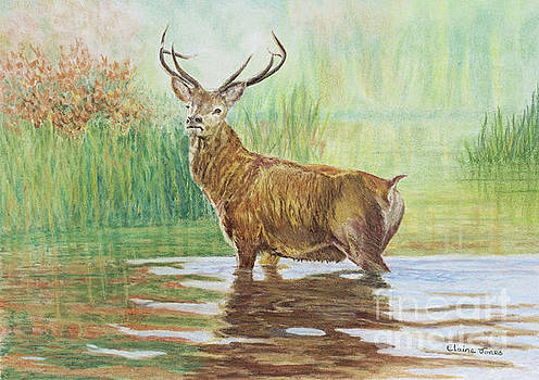 Red Deer Stag in Autumn by Elaine Jones