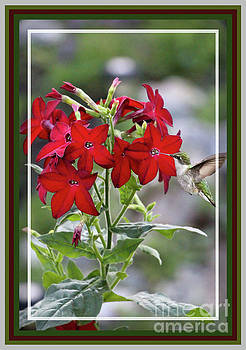 Sandra Huston - Red Delight, Framed