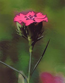 Red Dianthus by Joe Halinar