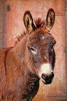 Red Donkey Burro by Mary Vandenberg