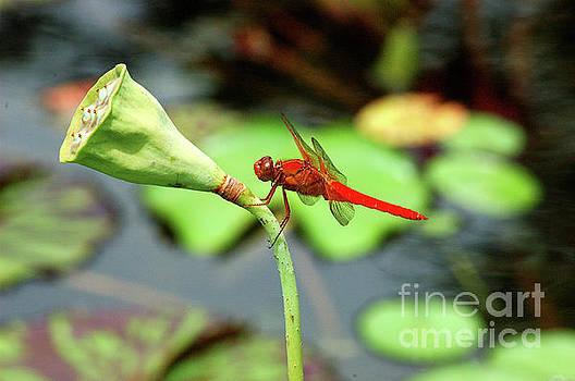 Robert Anschutz - Red Dragon