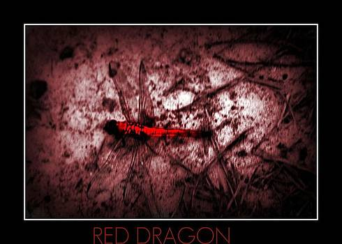 Red Dragon by Vanessa Reed