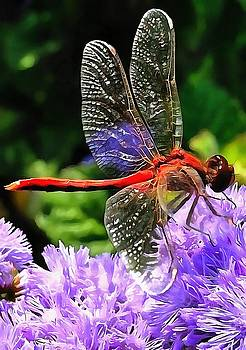 Tracey Harrington-Simpson - Red Dragonfly on Violet Purple Flowers