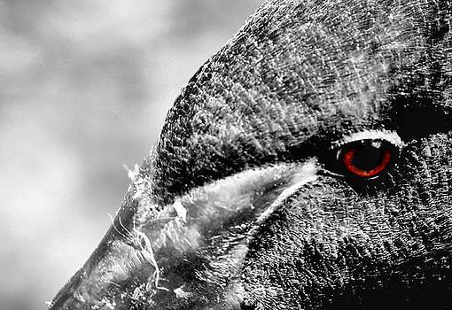 Karen M Scovill - Red Eye Express