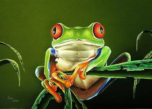 Red eyed Frog by Pravin  Sen