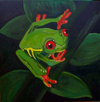 Red eyed tree frog by Darla Dixon