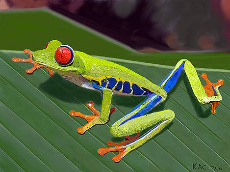 Red-Eyed Tree Frog by Kenny Chaffin
