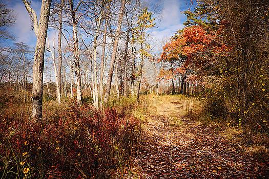 Red Fall at Wertheim by Vicki Jauron