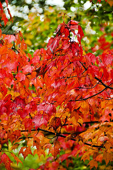 Red fall leaves by Bonnie Fink