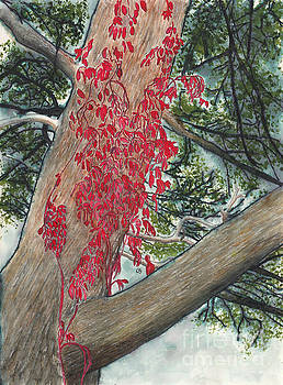 Red Fall Vines on Big Old Tree by Conni Schaftenaar
