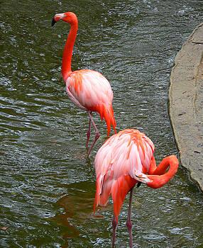 Red Flamingos by Rosalie Scanlon