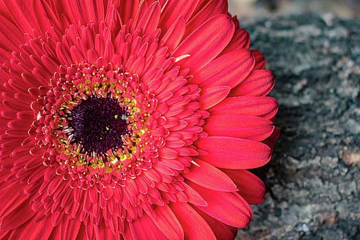 Red flora by Stephanie Johnson