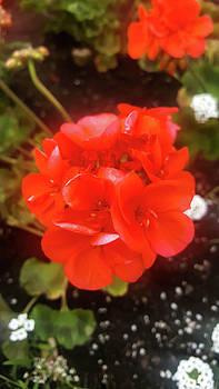 Red Flower by Britten Adams