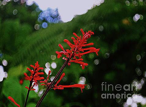 Gary Wonning - Red Flower