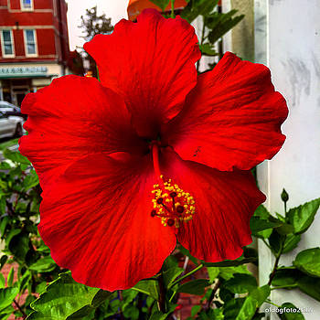 Red Flower by Micheal Driscoll
