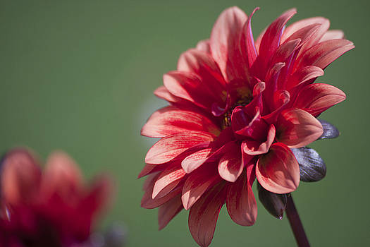 Red flower by Mickael PLICHARD