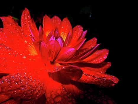 Red Flower by Nik Watt