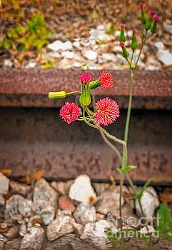 Red Flower on RR tracks ver 1 by Larry Mulvehill