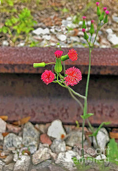 Red Flower on RR tracks ver 2 by Larry Mulvehill