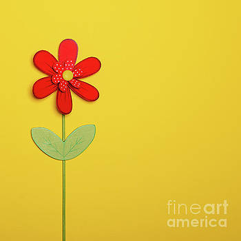 Red flower on yellow background - Flat lay minimal design by Aleksandar Mijatovic