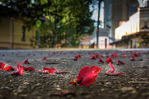 Red Flower Petals by Kenny Thomas