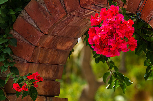 Red Flower Taormina Sicily by Xavier Cardell