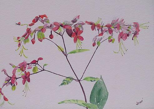 Red Flower Vine by Hilda and Jose Garrancho