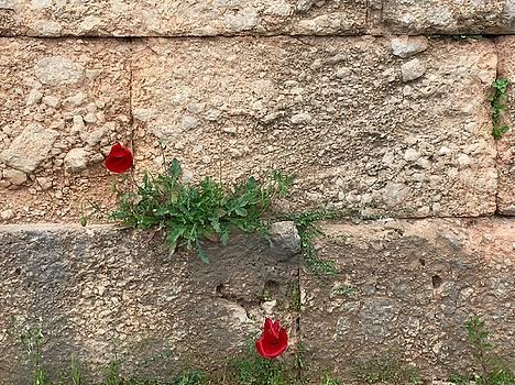 Red Flowers in Ruins by Leslie Brashear
