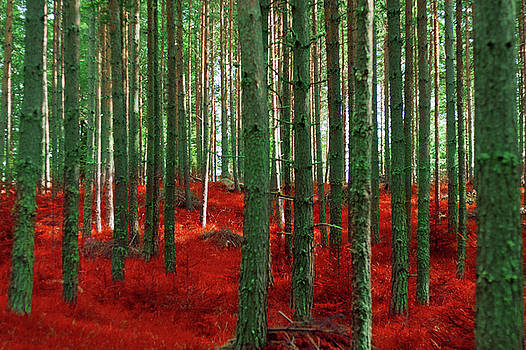 Red Forests  by Violet Gray