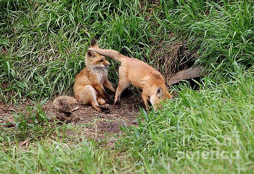 Red Fox Kits by Lori Tordsen