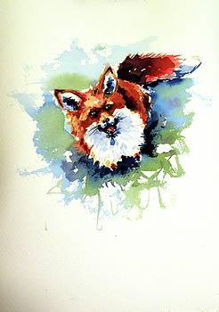 Red fox sitting by Kovacs Anna Brigitta