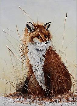 Red Fox Waiting on Breakfast by Jimmy Smith