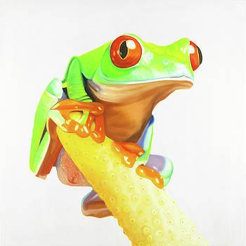 Red Frogs by Atelier B Art Studio