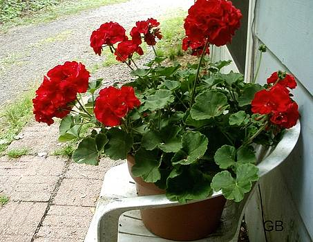 Red Geraniums by Glenda Barrett