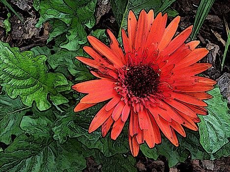 Red Gerbera Daisy by John Arthur Robinson