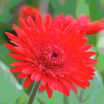 Red Gerbera Posterized by Suzanne Gaff
