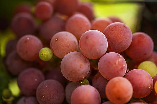 Jenny Rainbow - Red Grapes Close Up