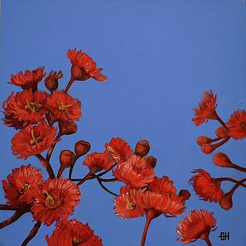 Red Gum Blossoms by Chris Hobel