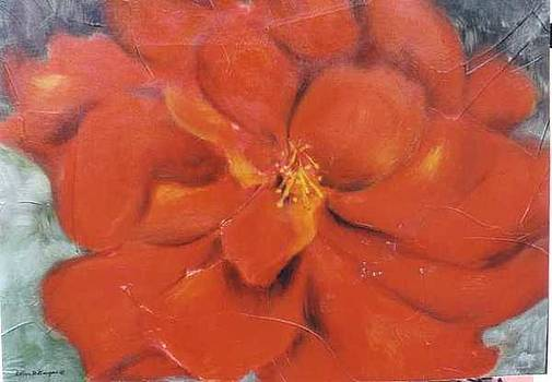 Red Hibiscus on Silver by Selma Cooper