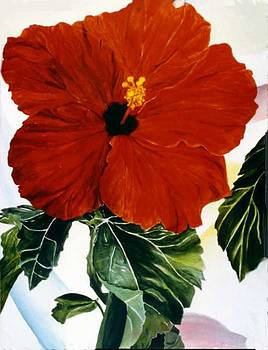 Red Hibiscus by Selma Cooper