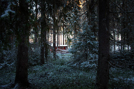 Red hut in a dark wintry conifer forest by Ulrich Kunst And Bettina Scheidulin