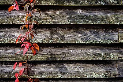 Red Ivy by Glenn DiPaola